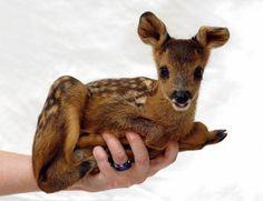 Hay mucha belleza en lo pequeño, como es el caso de estos animales.