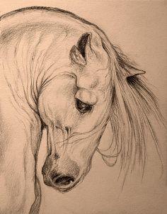Drawing of the horse head. /Beautiful EL./