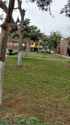 OCASION VENDO DPTO. $ 78,000 3 DORM. VISTA A PARQUE EL PINAR OCASION VENDO CHALET FRENTE A PARQUE EN 1er. PIS .. http://lima-city.evisos.com.pe/ocasion-dpto-frente-a-parque-4-dorm-65000-id-550327