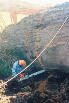 Ancient Kauri wood; 50,000 year old buried forests in New Zealand