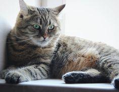 «Недоумевашки у Дашки #dashka_the_cat #topcatphoto #cat #cats #kitty #cat_of_instagram #catsofinstagram #petbro #meowbox #cats_ingram #catstocker #nicecat…»