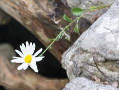 lizenzfreie Fotos einsame Blume http://www.foto-tfp.de/