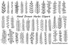 Hand Drawn Herbs Clipart by PassionPNGcreation on @creativemarket