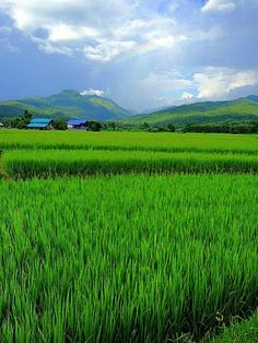 Immagine tramite We Heart It. Village Photography, Beach Photography, Landscape Photography, Nature Photography, Village Photos, Indian Village, Rainbow Sky, Back To Nature, Life Photo