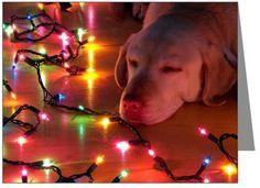 Yellow lab Christmas