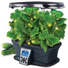 Мне Это Жизненно Необходимо Aerogarden Herbs Indoors 640 x 480