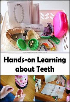 Hands-on Learning about Teeth - Helping children keep their teeth clean, exploring different types of teeth and looking at parts of teeth, links to books about teeth.