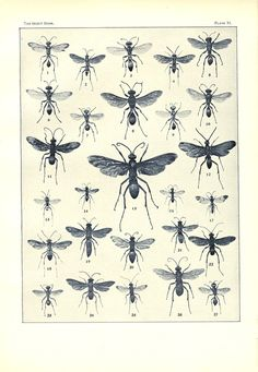 Antique Insect Paper Print of Wasps Black and by wesellusedgods, $18.00
