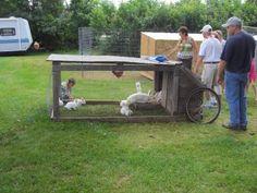 Rabbit Tractor FTW!