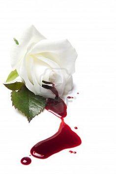 President Snow's Rose.