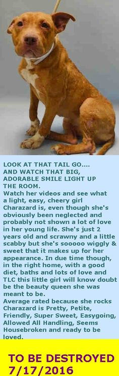 SAFE 07/17/16 --- Brooklyn Center  My name is CHARAZARD. My Animal ID # is A1080267. I am a female brown and white am pit bull ter mix. The shelter thinks I am about 2 YEARS  I came in the shelter as a STRAY on 07/07/2016 from NY 11229, owner surrender reason stated was STRAY. http://nycdogs.urgentpodr.org/charazard-a1080267/