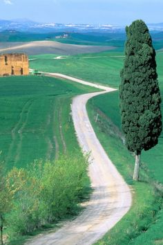 Country Road - #Tuscany, #Italy