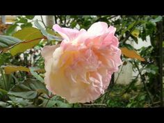 Horta, frutas e flores no jardim: Antúrios, avencas, rosas, bromélias e outras plant...