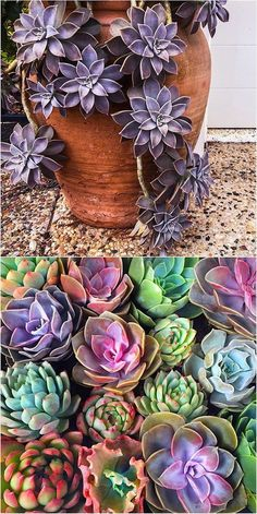Wishing you a bright and colorful day ❤️ #succulents #succulent #thesucculentsource