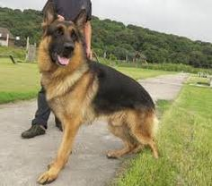 2and4k9security UK K9 PROTECTION | 2and4k9security UK K9 PROTECTION UK