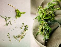 Picking, Drying & Freezing: How to Preserve Summer's Herbs