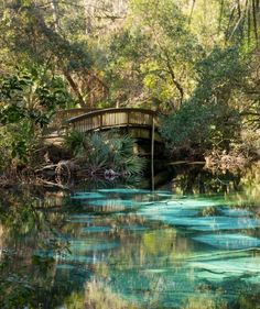 Juniper Springs Recreation in the Ocala National Forest. Florida. I stood on that bridge one March many moons ago.
