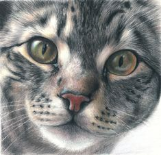 colour pencil... this looks like the cat she had when I was little... I was do scared of that cat... whose name was grey cat