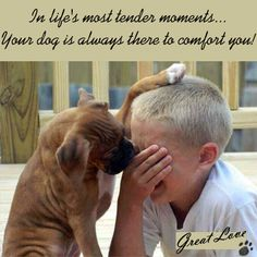 Life is precious & so are our Dogs! They understand our emotions and it's amazing how they can bring love & comfort to people. Love GREAT... that dog who loves you so GREAT ♥
