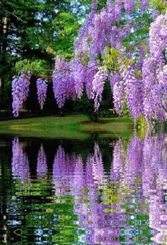 dreamies de gif) All Garden Scenery flowersandgardens flowers gardening is part of Flowers nature - Beautiful Nature Wallpaper, Beautiful Landscapes, Beautiful Gardens, Purple Flowers, Beautiful Flowers, Beautiful Gif, Beautiful Scenery, Flowering Trees, Nature Pictures