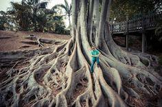 WORLD WONDERS ☪ :: Banyon Tree