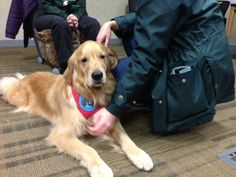 Therapy Dogs Help MSU Students Relax