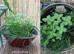 Wasser gehört zu einem Garten einfach dazu. Da auch ein Balkon zu einem Garten werden kann darf ein kleiner Teich nicht fehlen. Wasserminze, Binsen und Wiesenschaumkraut gedeihen prächtig!