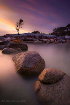 That tree by Andy Smith on Binalong bay, tasmania. Landscape Photography, Nature Photography, Visit Argentina, Quelques Photos, Cultural Experience, Foto Art, One Tree, Nature Paintings, Amazing Nature