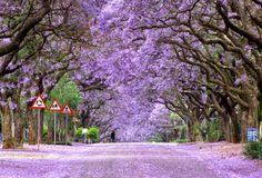 Los 12 árboles más bonitos del mundo                              …