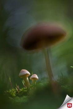 Mushroom Fungi, Depth Of Field, Photo S, Dandelion, Stuffed Mushrooms, Nature, Flowers, Plants, Photography