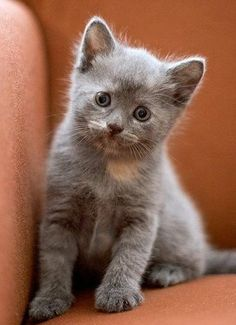 Time for an extremely cute kitten….