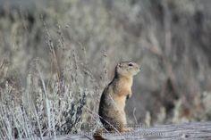 Prairie Dog Bend Oregon