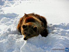 Séjour linguistique en Laponie avec le CEI  #Laponie #Lapland #CEI #voyage #travel #sejourlinguistique #winter #nature #snow #bear #ours