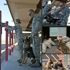 Military Working Dogs 101 - Chapter 2(a): Gunfire Training  The purpose of gunfire training is to get canines familiar to the sound of gunfire at very close range and be able to respond appropriately to avoid mishaps during real-world combat operations.  Read more here: www.facebook.com/uswardogs1
