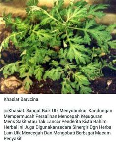 Healthy Tips, Healthy Recipes, Back To Nature, Medicinal Plants, Herbal Medicine, Better Life, Herbalism, Remedies, Survival