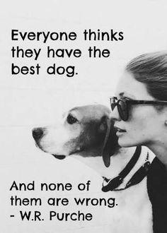 Bilderesultat for dogs are better than humans