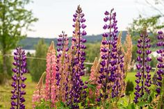 Flowers in Sweden