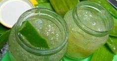 Preparare una crema naturale a base di aloe vera è semplicissimo, e ci aiuta a [Leggi Tutto...]