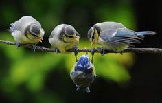 わわわ、青い鳥さんが落ちそうです!! がんばってください!!
