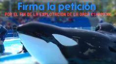 · Rehabilitation Petition for Orca Kshamenk @mariuvidal · Change.org