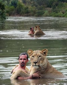 Swimming with a lion: | 38 Situations That Aren't Going To End Well