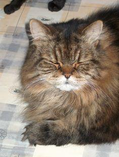 Toby,deze kat zal ik eeuwig blijven missen.Zo een schat krijgen we nooit meer ily