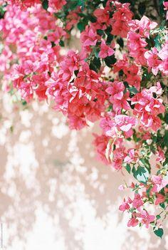 pink bougainvillea close up Bougainvillea, Beautiful Flowers Wallpapers, Cute Wallpapers, Flower Wallpaper, Nature Wallpaper, Fotografia Tutorial, Graffiti Wall Art, Flower Aesthetic, Background Pictures