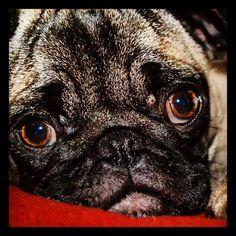 Such intense eyes