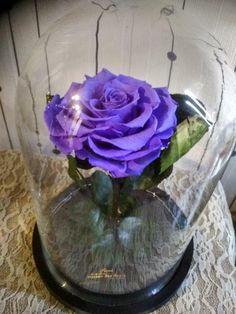 Forever Rose, Cabbage, Vegetables, Food, Essen, Cabbages, Vegetable Recipes, Meals, Yemek