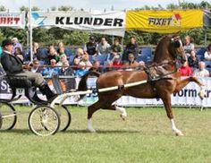 Dutch Harness Horse Unaniem sired by Renovo
