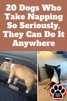 Naps are serious business. Especially when you're a dog with nothing better to do! These 20 dogs are here to show you that naps come in all shapes, sizes, and positions. Dog Jokes, Funny Dog Memes, Funny Dogs, Cute Dogs, Dog Humour, Humor, Sad Pictures, Funny Animal Pictures, Training Tips
