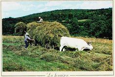 GeoDaszner chronique la Nièvre: Machinisme agricole. Non polluant.
