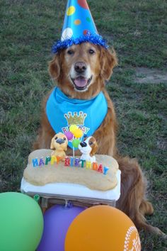 Our friend Rusty`s 11th Birthday Party - doesn't he look happy?  Dogs understand more than we know.
