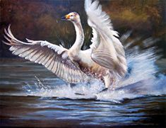 """Perfect Landing by Nancee Jean Busse Acrylic ~ 24"""" x 30""""Original Swan Painting """"Perfect Landing"""" by Colorado Artist Nancee Jean Busse, Painter of the American West"""